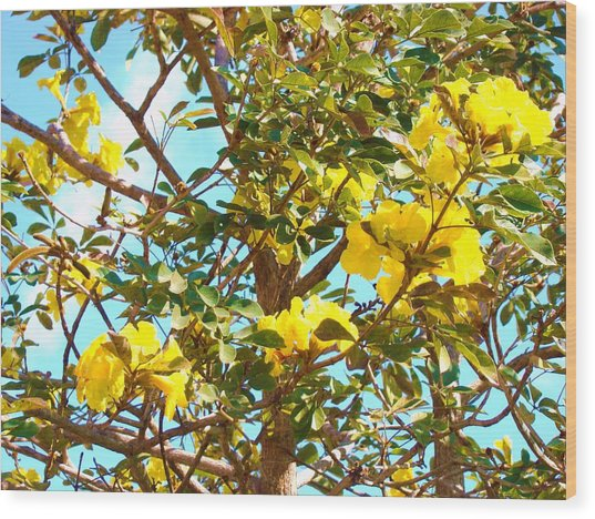 Flowering Tree Wood Print by Van Ness