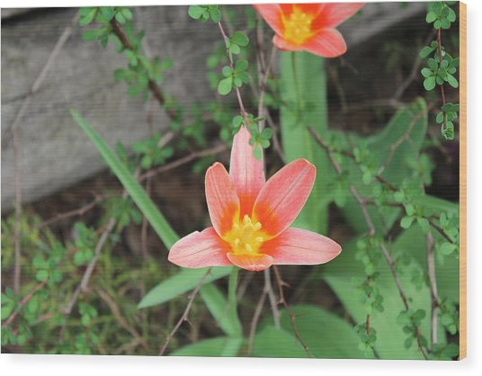Flowers Against A Plank Wood Print