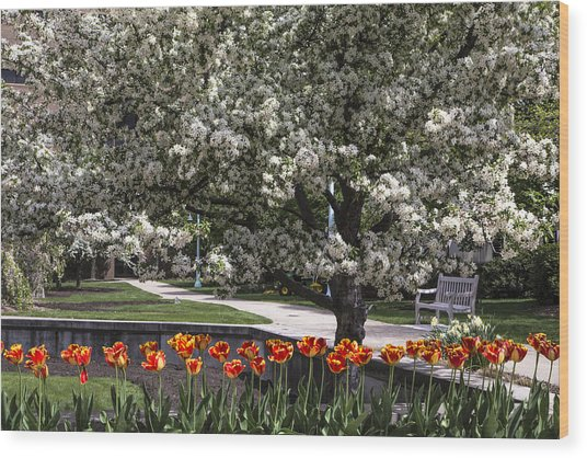 Flowers And Bench At Michigan State University  Wood Print