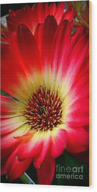 Flowers Are Happiness Wood Print