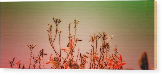 Flowers Dreaming Wood Print by Vidyalakshmi AC