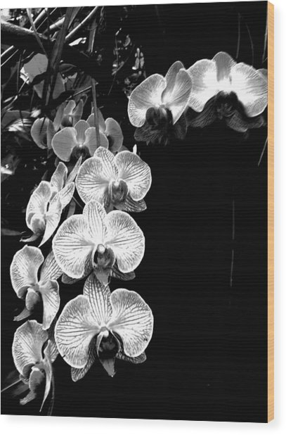 Flowers In Black And White Wood Print