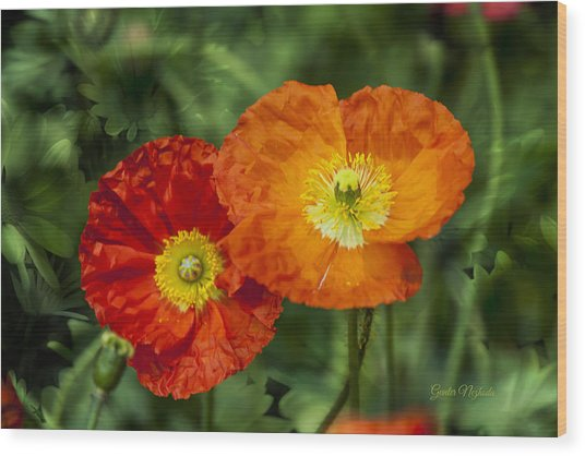Flowers In Kodakchrome Wood Print