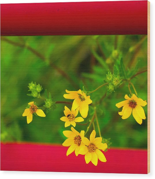 Flowers In Red Fence Wood Print