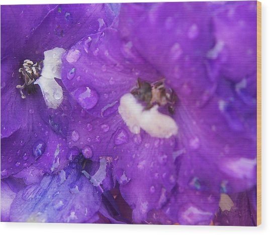 Flowers In The Rain Wood Print by Chrissy Dame