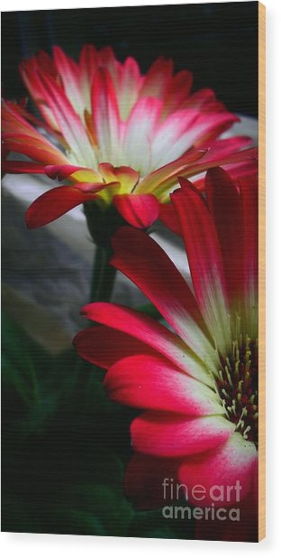 Flowers Just For Mr. Toes Wood Print