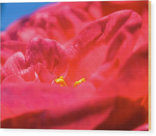 Flowers Of Camellia Wood Print