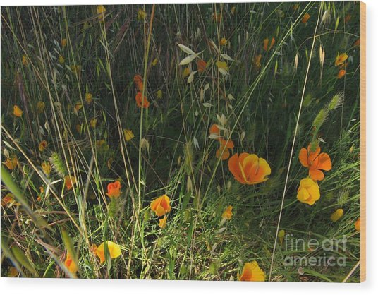 Flowers Of Wild  Wood Print by Tim Rice