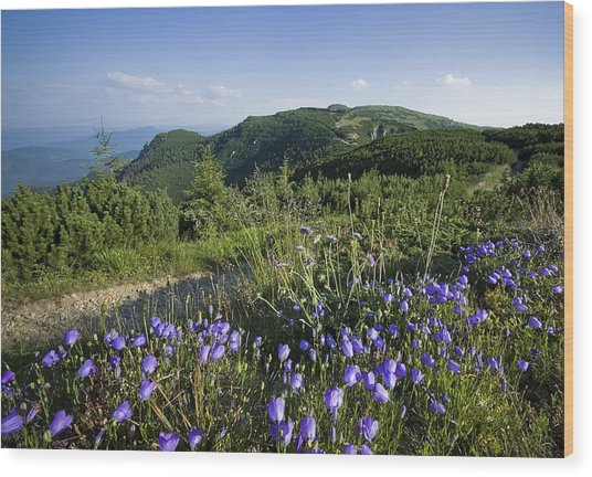 Flowers On Summer Mountain  Wood Print by Ioan Panaite