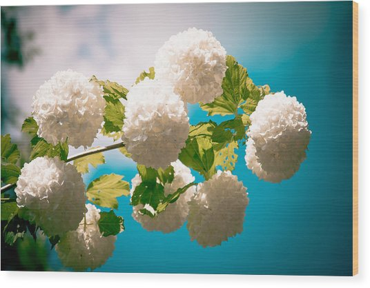Flowers With Blue Sky Wood Print