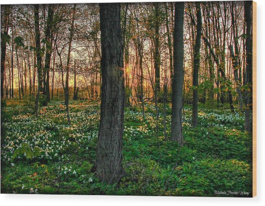Flowery Sunset Wood Print