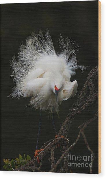 Fluffed Snowy Egret Wood Print