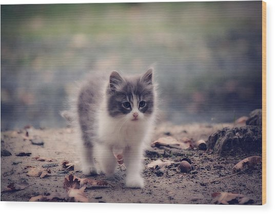 Fluffy Cuteness Wood Print