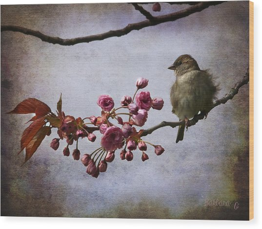 Fluffy Sparrow  Wood Print