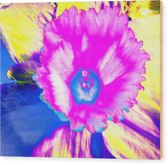 Fluorescent Daffodil  Wood Print