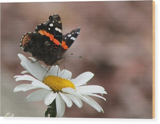 Flutter II Wood Print by Sarah Boyd