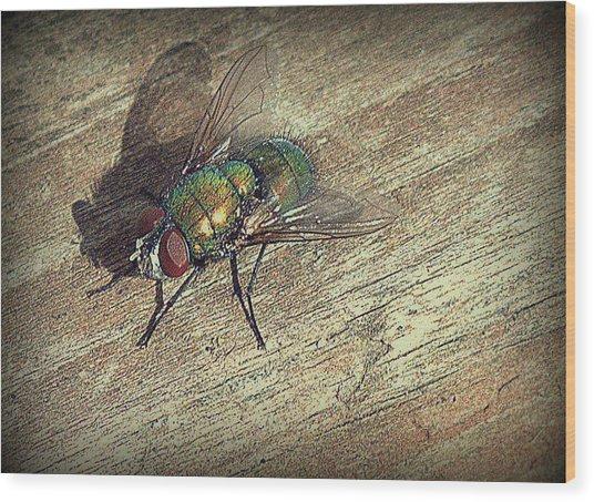 Fly Impressions Wood Print