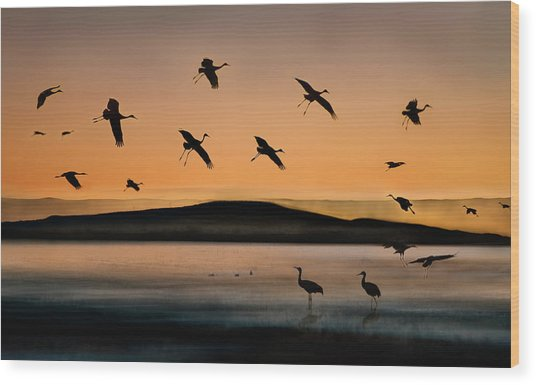 Fly-in At Sunset Wood Print