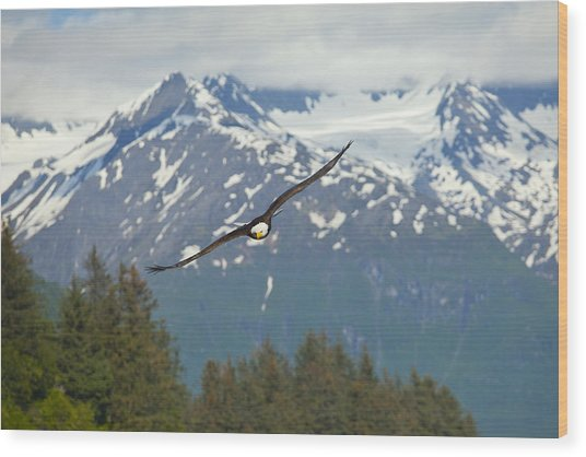 Flying Amongst The Mountains Wood Print by Tim Grams