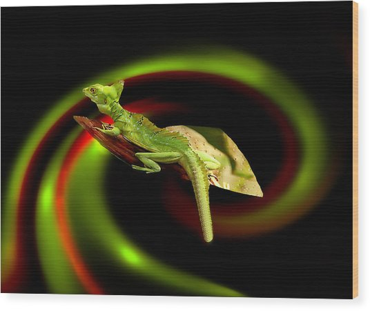 Flying Gekko Wood Print
