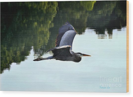 Flying Great Blue Heron Wood Print