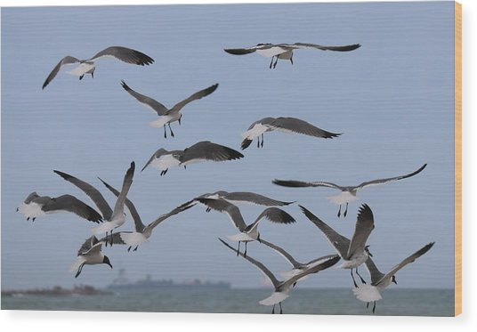 Flying Gulls  Wood Print