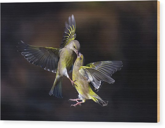 Flying Kiss 11 Wood Print