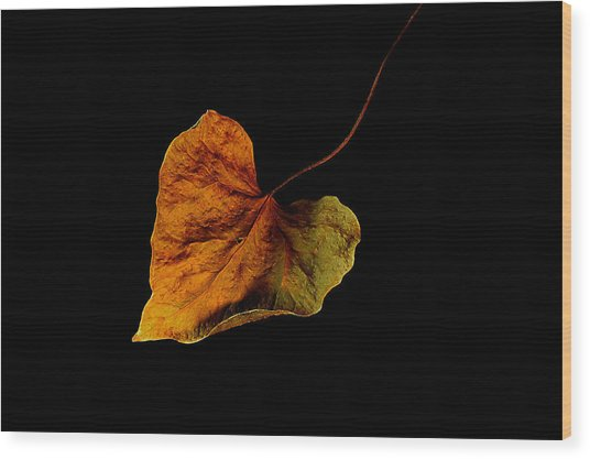 Flying Leaf Wood Print