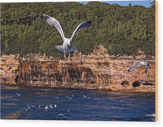 Flying Over The Rocks Wood Print by Cheryl Cencich