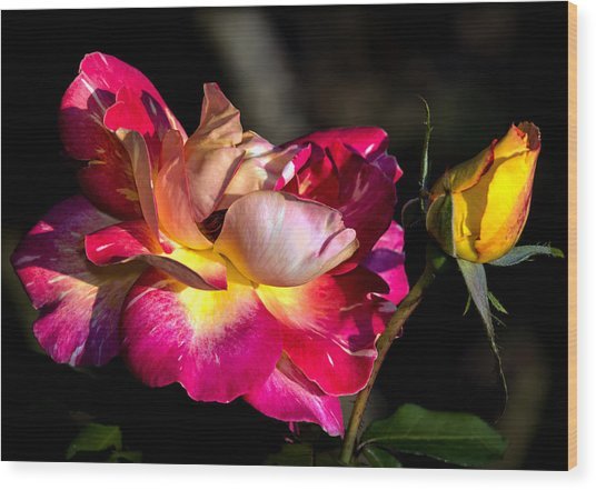 Flying Rose Wood Print