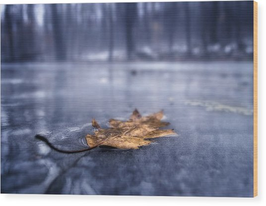 Fog Ice Leaf Wood Print