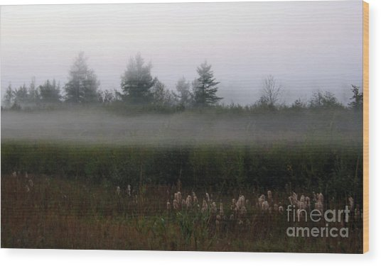 Fog Line Above Woodland Wood Print by Andre Paquin