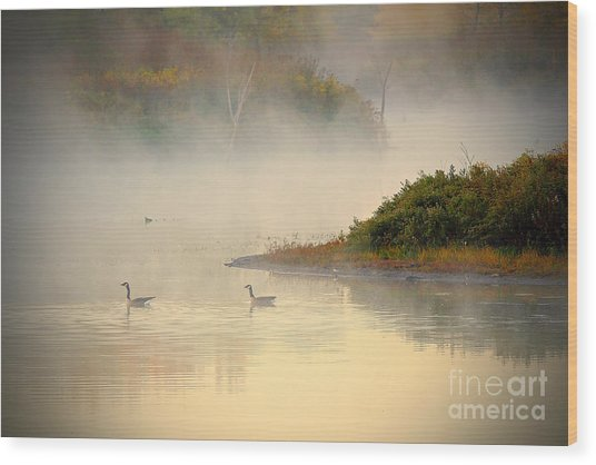 Foggy Autumn Swim Wood Print