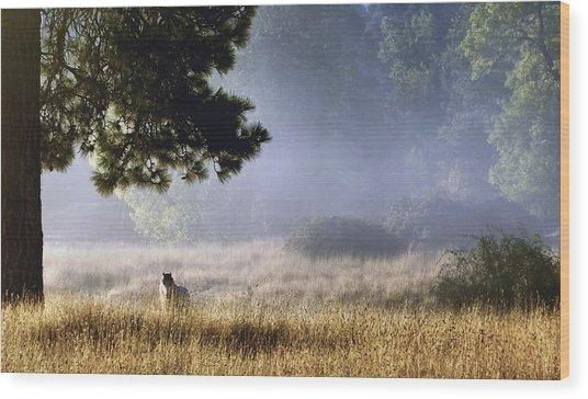 Foggy Grotto Wood Print