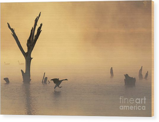 Foggy Landing Wood Print