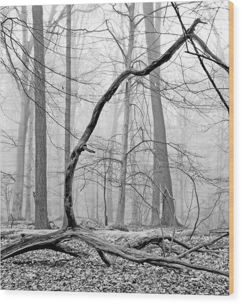 Foggy Morning Deciduous Forest Wood Print