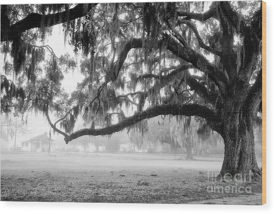 Foggy Morning On Coosaw Plantation Wood Print