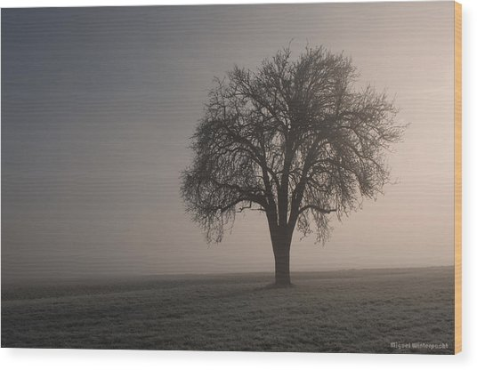 Foggy Morning Sunshine Wood Print