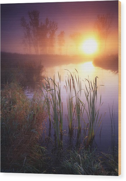 Foggy Sunrise Wood Print