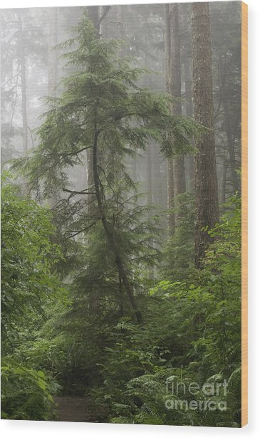 Foggy Woods Wood Print