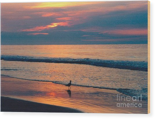 Following The Tide Wood Print by Debbie Bailey