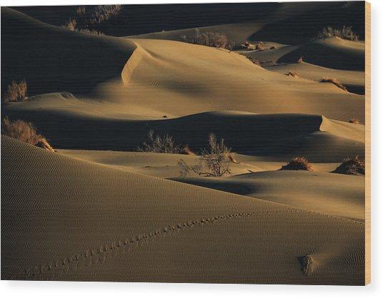Footprints Wood Print by Babak Mehrafshar (bob)