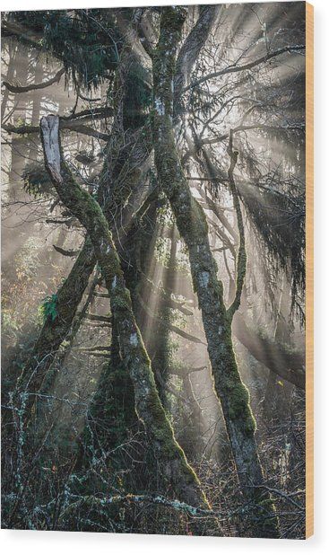 Forest Beams Wood Print by Mike  Walker