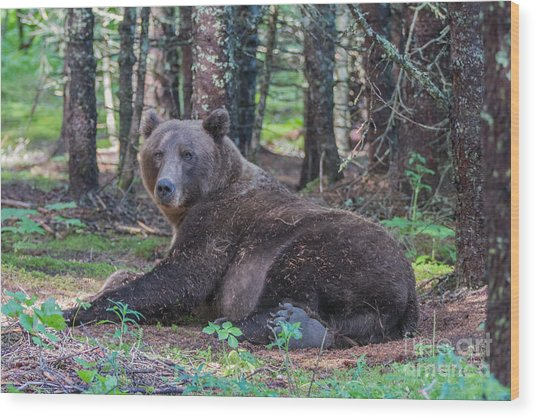 Forest Bear Wood Print