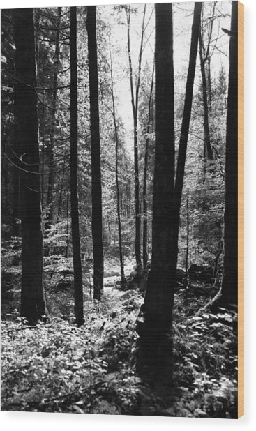 Forest Black And White 13 Wood Print by Falko Follert