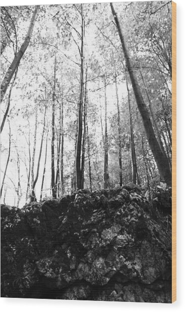 Forest Black And White 7 Wood Print by Falko Follert