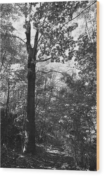 Forest Black And White Wood Print by Falko Follert