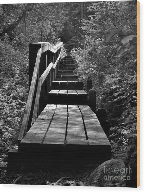 Forest Boardwalk Wood Print