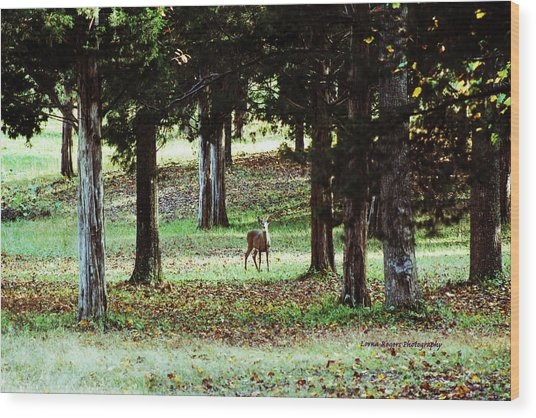 Forest Buck Wood Print