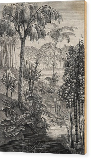 Carboniferous Period Wood Prints And Carboniferous Period Wood Art
